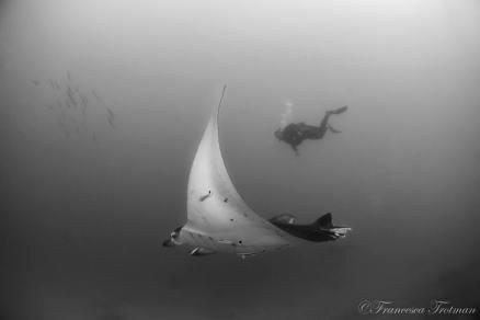 Manta Reef (cred. F.Trotman)